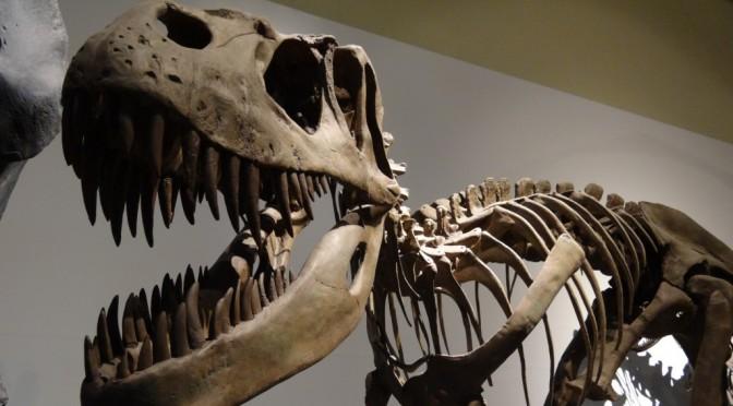 Museo-Ciencias-Naturales-1024x768